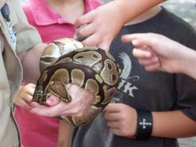 snake-touching.jpg