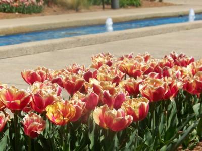 che-botanic-garden-1