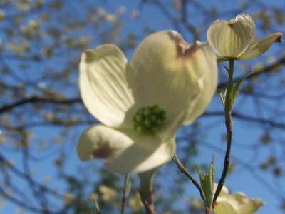 che-botanic-garden-5